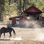 horse in front of red barn