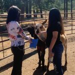 troubled teen girls taking care of animals